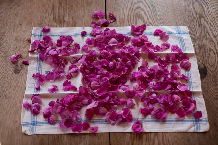 Roseblader_16